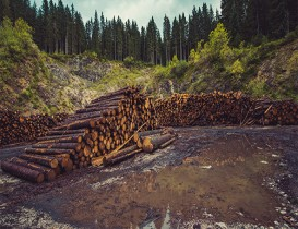 The New Forestry Momentum